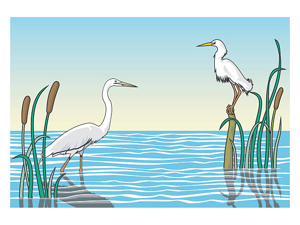 Freshwater Birds clipart #5, Download drawings