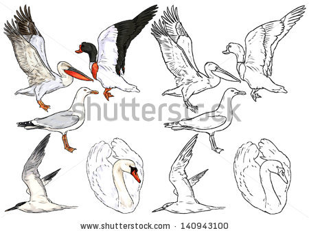 Freshwater Birds coloring #13, Download drawings