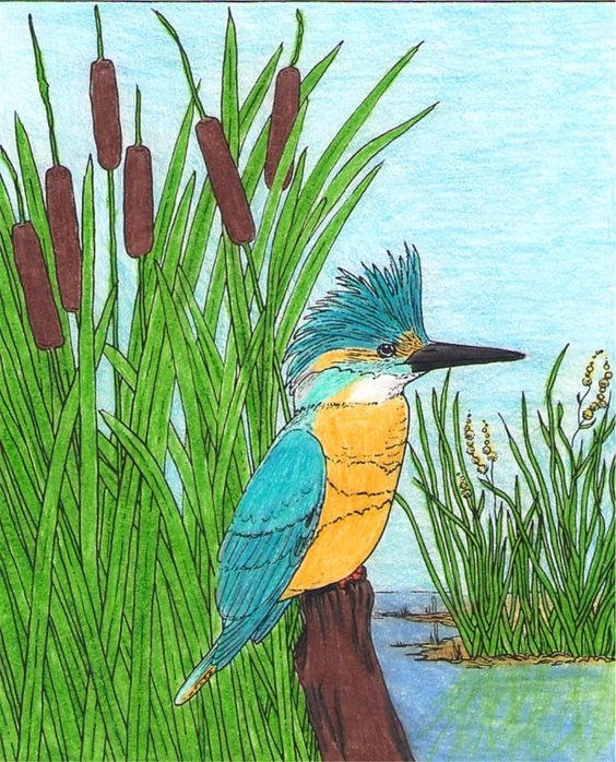 Freshwater Bird coloring #10, Download drawings