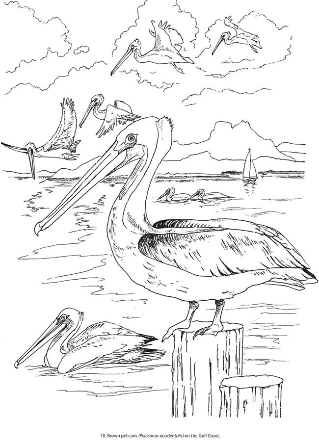 Freshwater Birds coloring #19, Download drawings