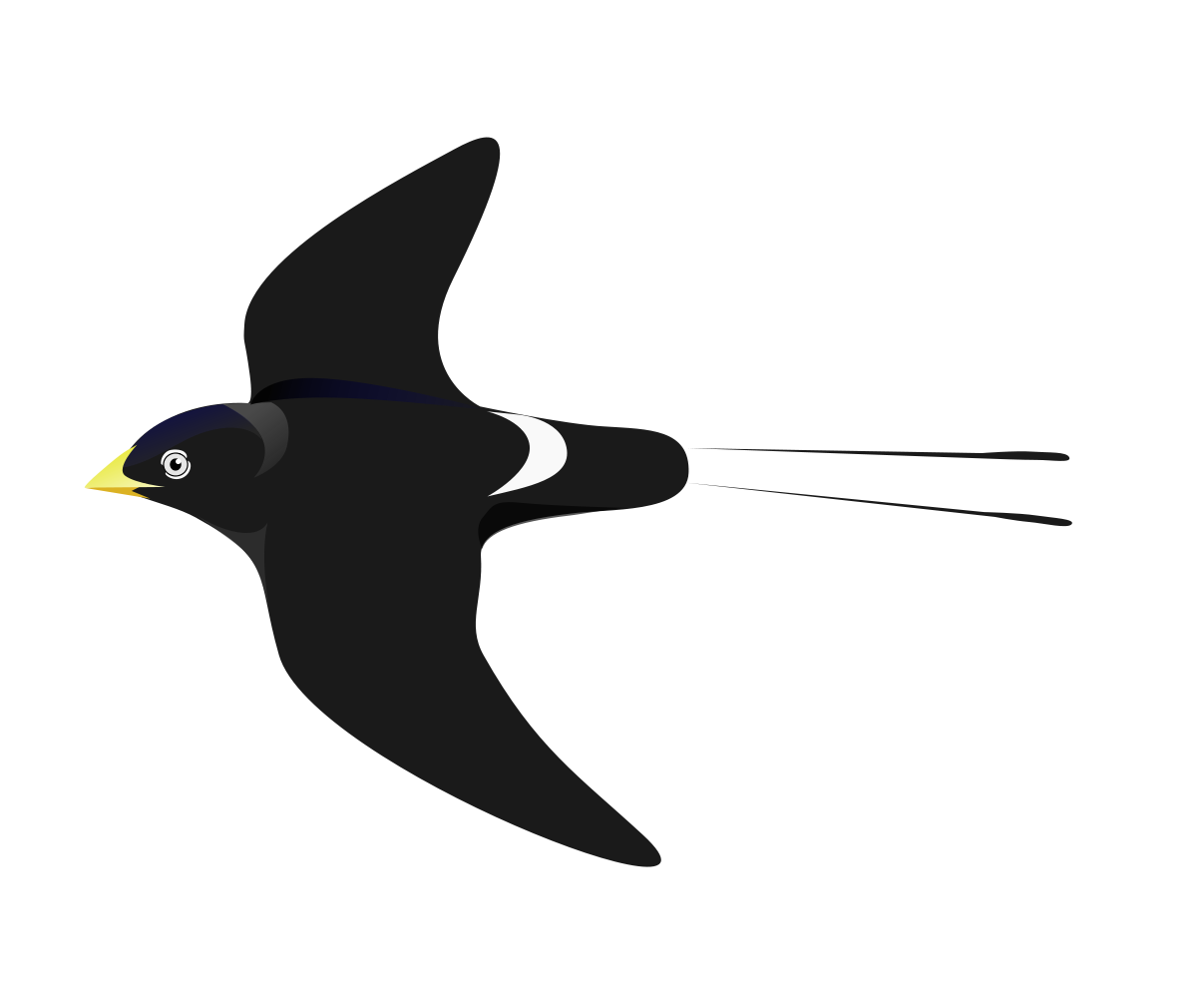 Swallow-tailed Hummingbird svg #20, Download drawings