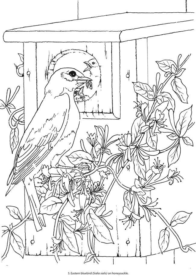 Freshwater Birds coloring #5, Download drawings
