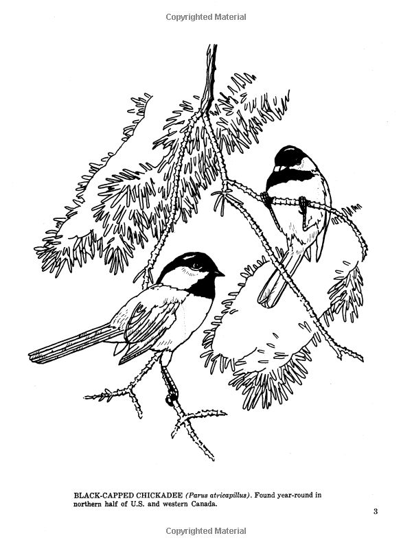 Freshwater Birds coloring #9, Download drawings