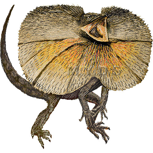 Frilled-neck Lizard clipart #8, Download drawings