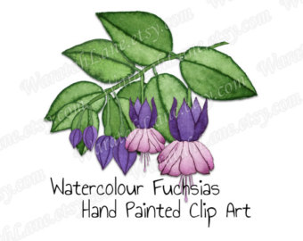Fuchsia clipart #3, Download drawings