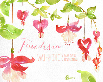 Fuchsia clipart #9, Download drawings