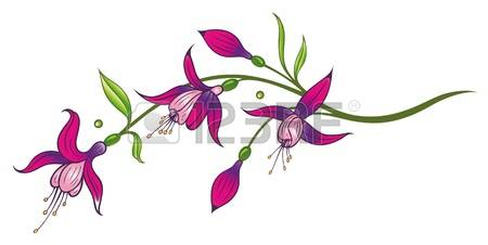 Fuchsia clipart #17, Download drawings