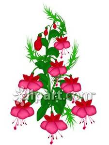 Fuchsia clipart #11, Download drawings