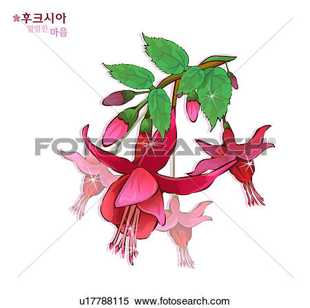 Fuchsia clipart #16, Download drawings