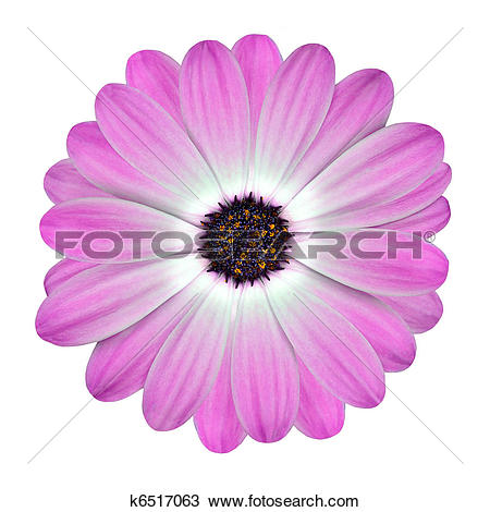 Fuschia clipart #6, Download drawings