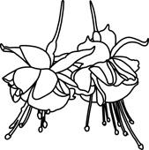 Fuschia clipart #18, Download drawings