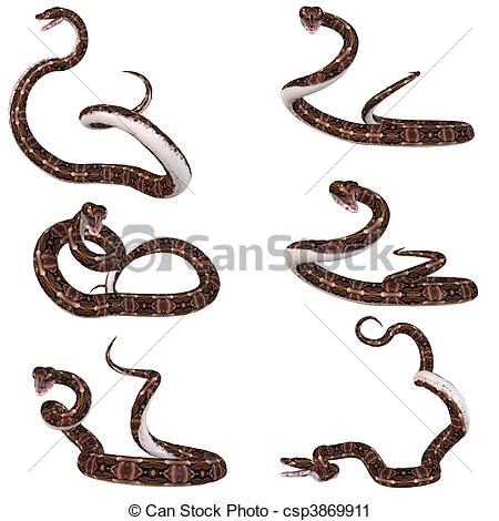 Gaboon Viper clipart #3, Download drawings