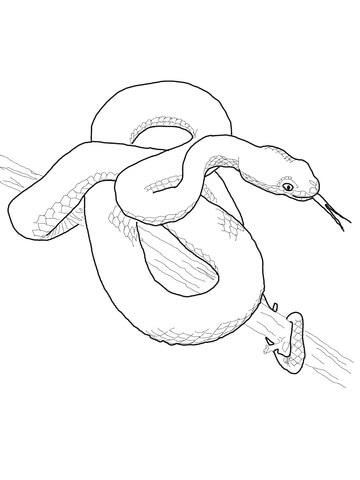 Gaboon Viper coloring #6, Download drawings
