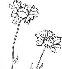 Gaillardia clipart #20, Download drawings