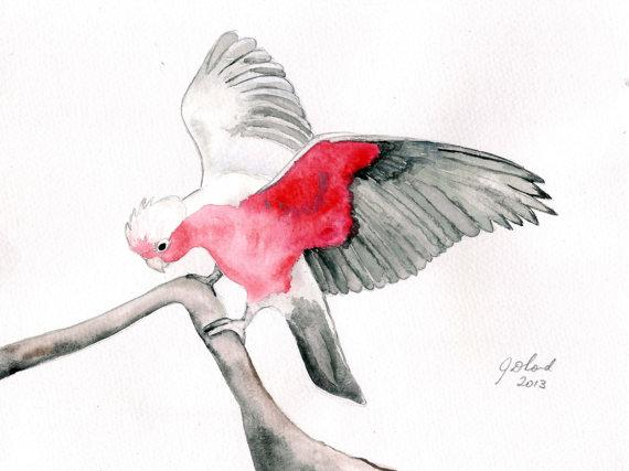 Galah clipart #12, Download drawings