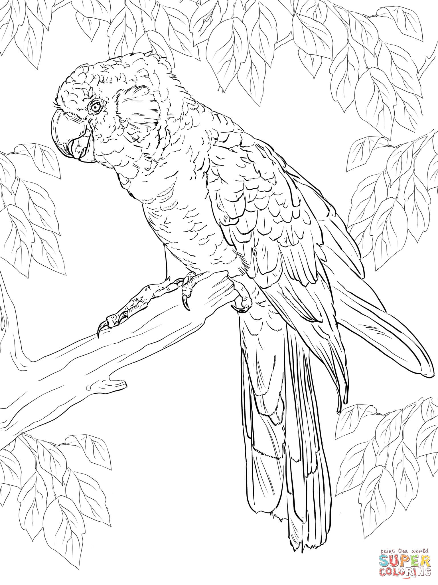 Galah coloring Download Galah