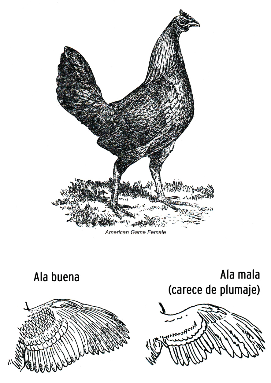 Gallos Finos coloring #15, Download drawings
