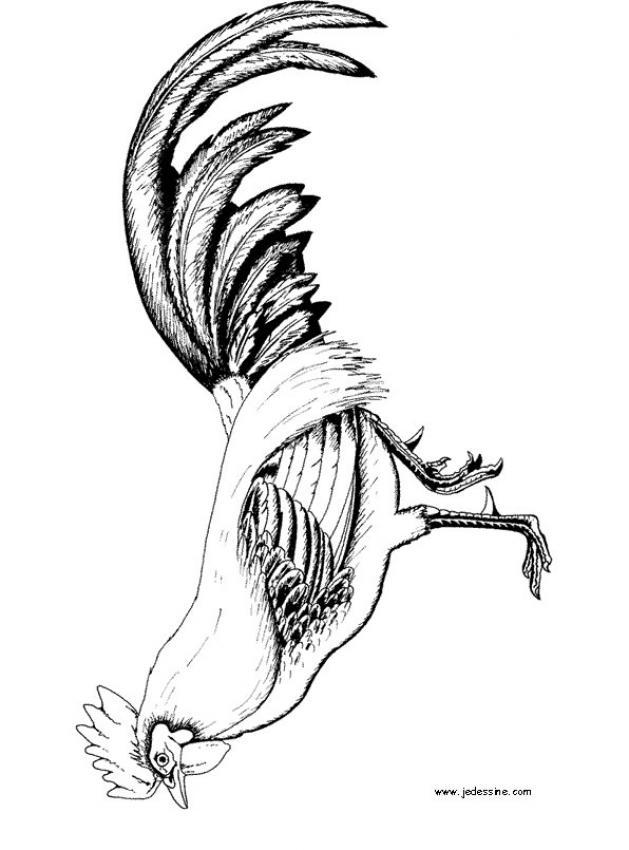 Gallos Finos coloring #10, Download drawings