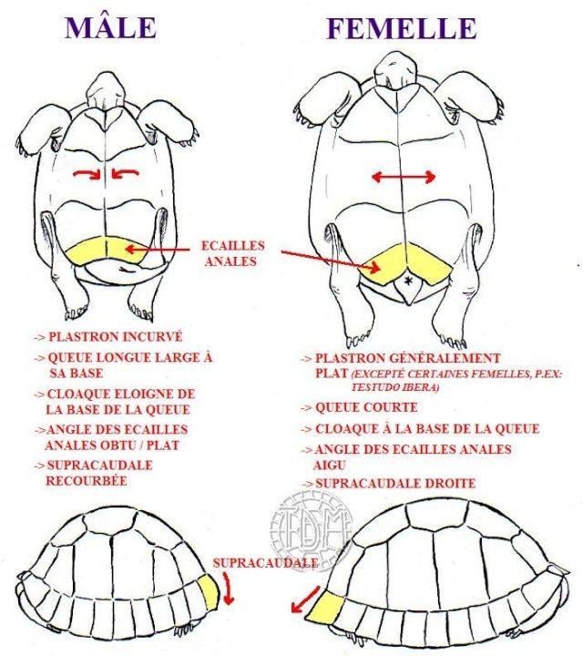 Gal#U00e1pagos Tortoise clipart #12, Download drawings