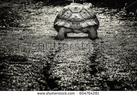 Gal#U00e1pagos Tortoise clipart #2, Download drawings