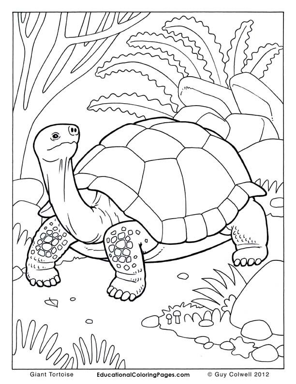 Tortoise coloring #7, Download drawings