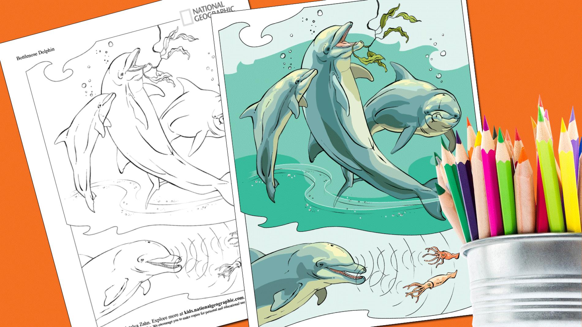 Gal#U00e1pagos Tortoise coloring #1, Download drawings