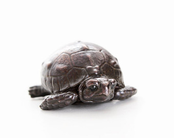 Gal#U00e1pagos Tortoise svg #4, Download drawings