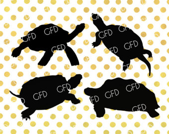 Gal#U00e1pagos Tortoise svg #9, Download drawings