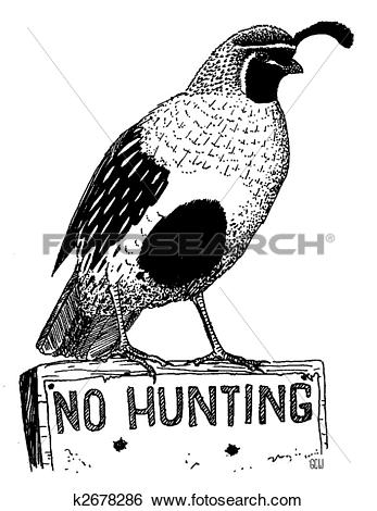 Gambel's Quail clipart #19, Download drawings