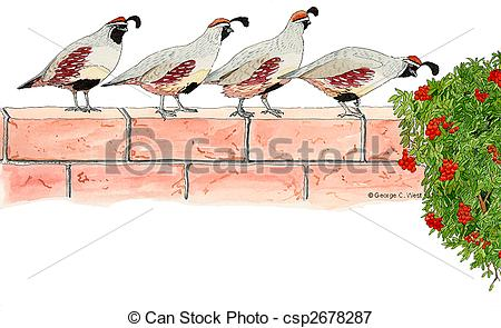Gambel's Quail clipart #6, Download drawings