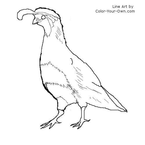 Gambel's Quail coloring #1, Download drawings