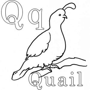 Gambel's Quail coloring #6, Download drawings