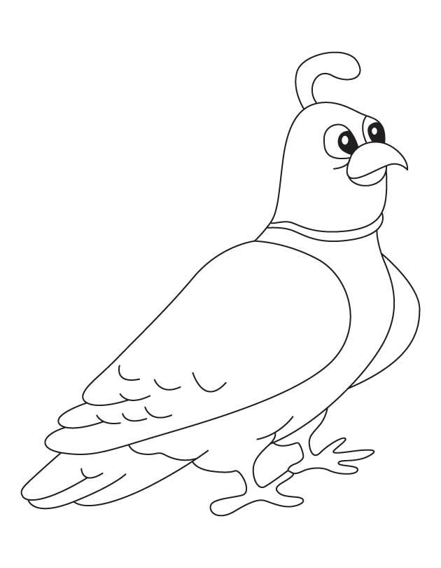 Gambel's Quail coloring #9, Download drawings