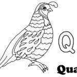 Gambel's Quail coloring #12, Download drawings