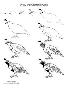Gambel's Quail coloring #20, Download drawings