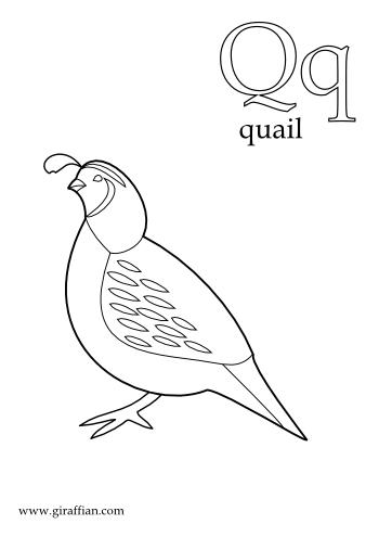 Gambel's Quail coloring #15, Download drawings