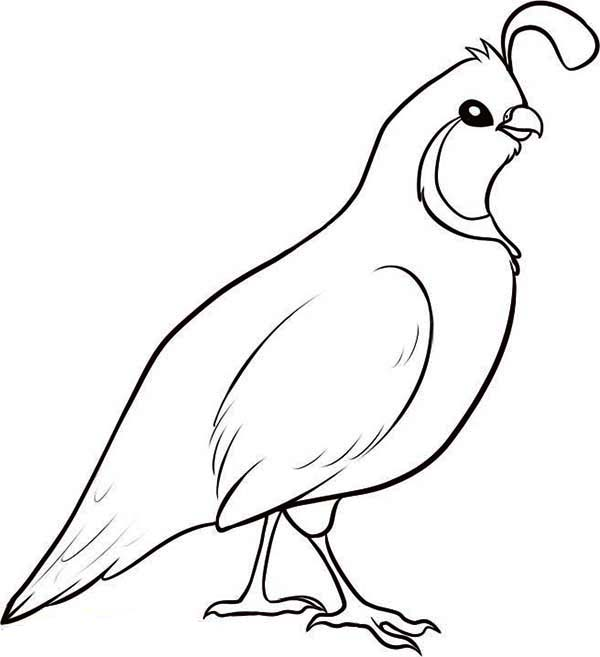 california state bird coloring pages - photo#15