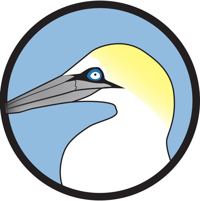 Gannet clipart #3, Download drawings