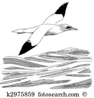 Gannet clipart #19, Download drawings