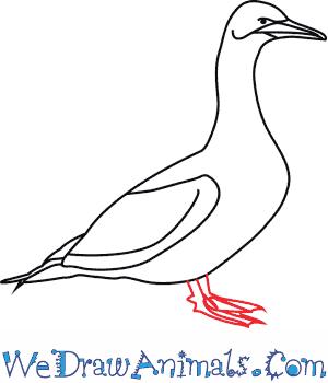 Gannet coloring #11, Download drawings