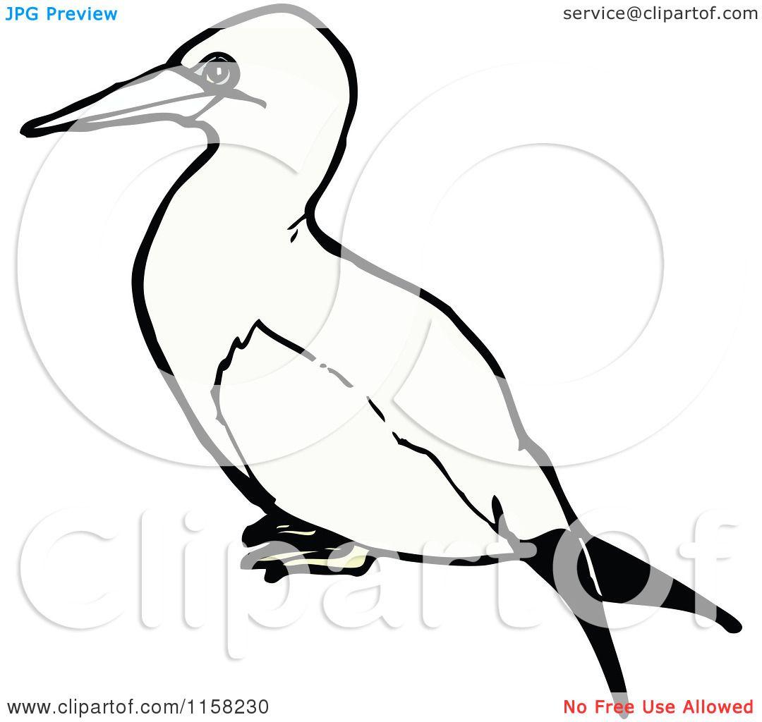 Gannet coloring #19, Download drawings