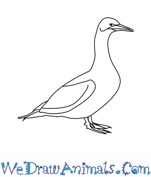 Gannets coloring #19, Download drawings