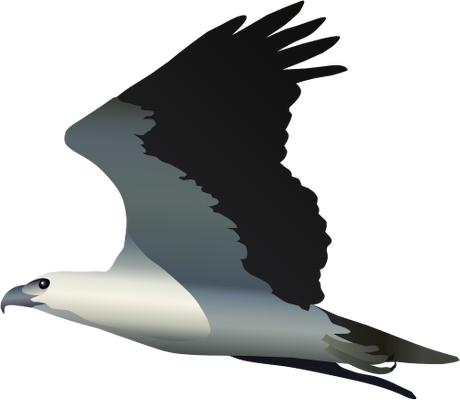 White-bellied Sea Eagle svg #20, Download drawings