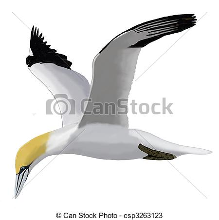 Northern Gannet clipart #1, Download drawings