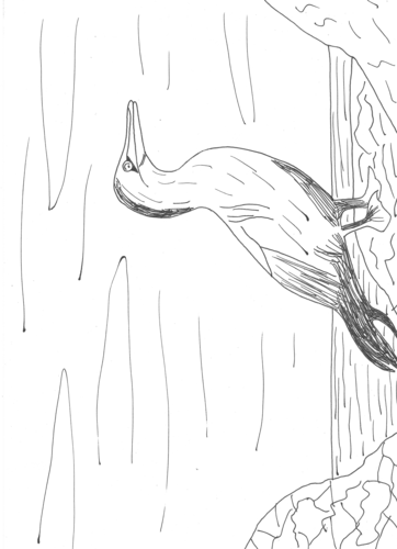 Gannets coloring #3, Download drawings