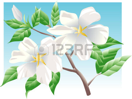 Gardenia clipart #8, Download drawings