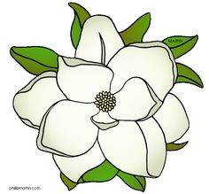 Gardenia clipart #18, Download drawings