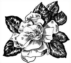 Gardenia clipart #19, Download drawings