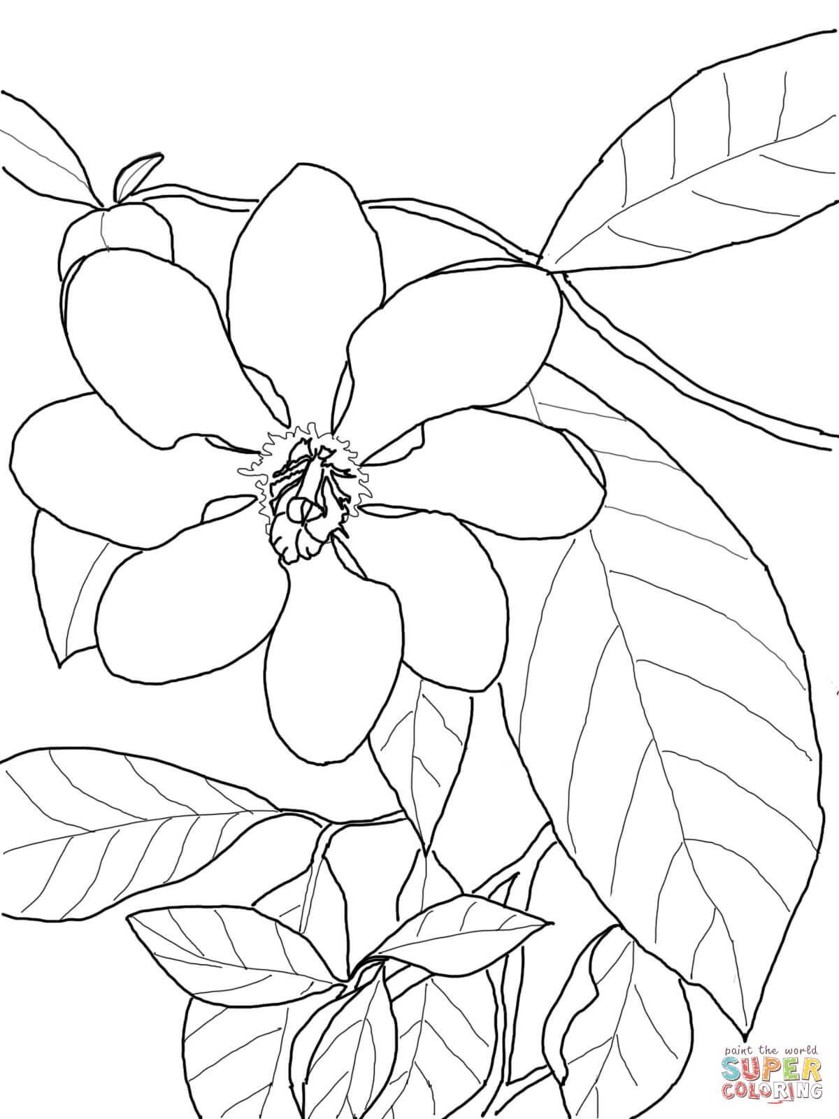 Gardenia coloring #13, Download drawings
