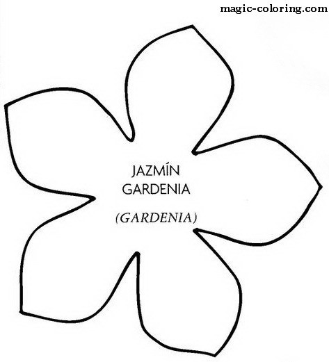 Gardenia coloring #14, Download drawings